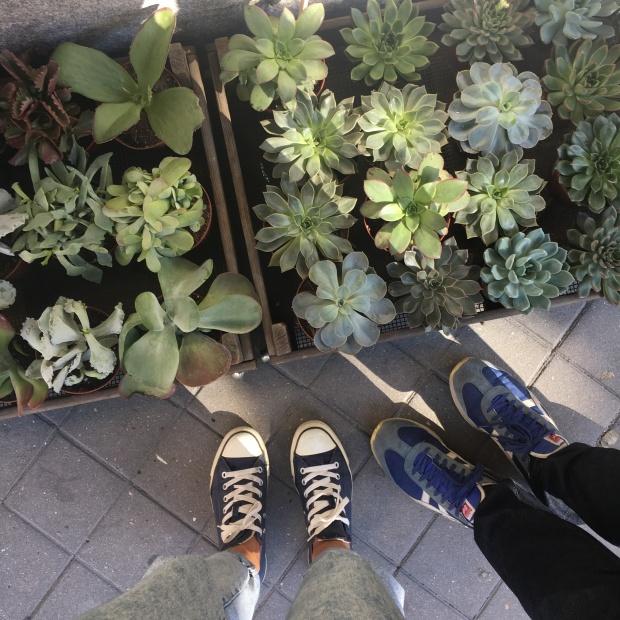 Cactus por doquier en Cacto Cacto